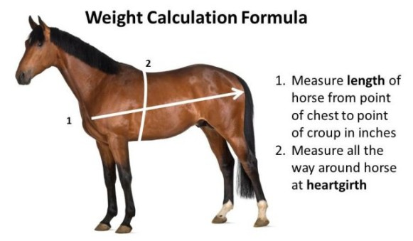 happy-horse-healthy-planet_weight-calculation-2