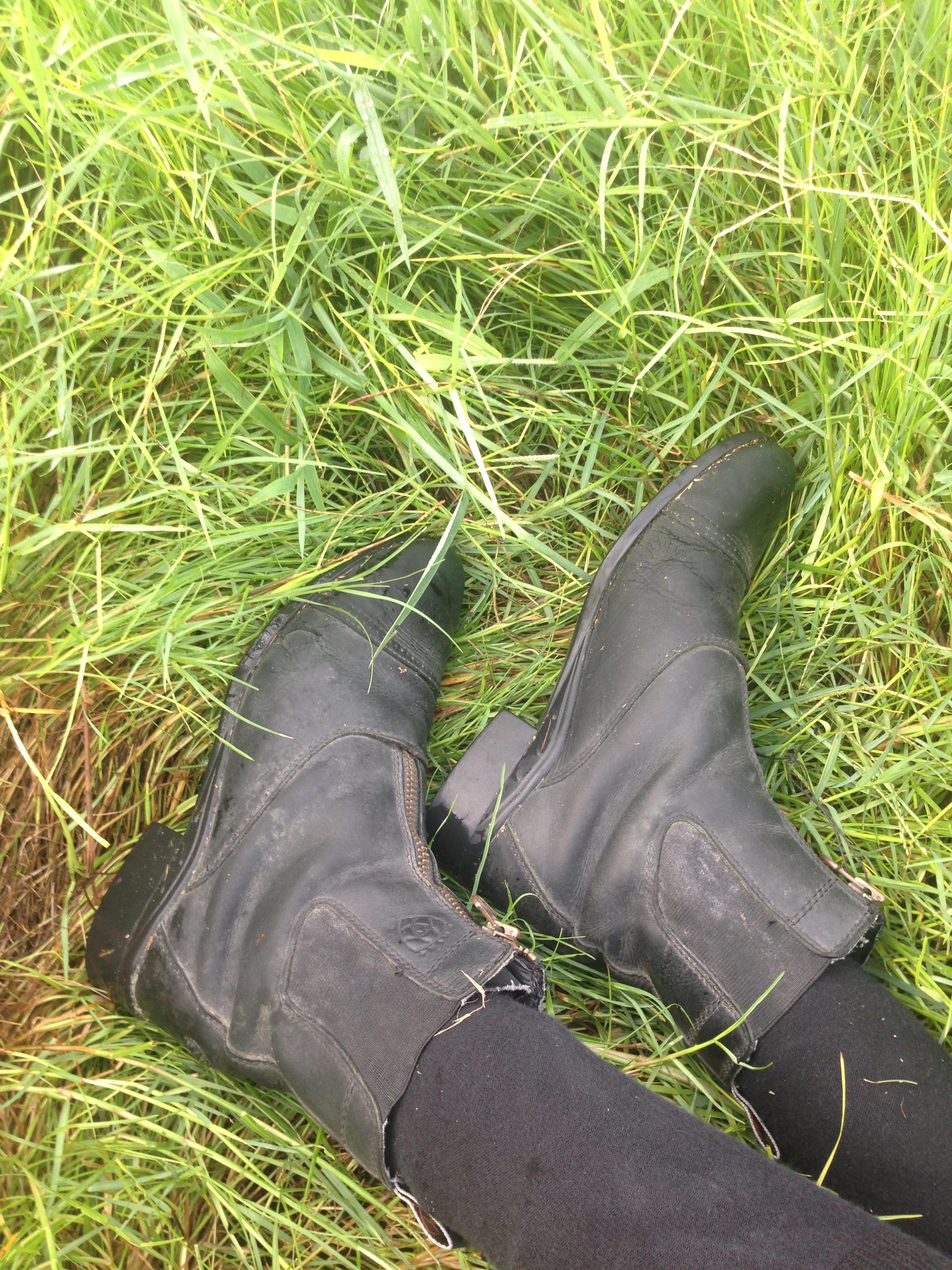 Ariat Heritage III Zip Paddock Boots [REVIEW] | Tofino Tack