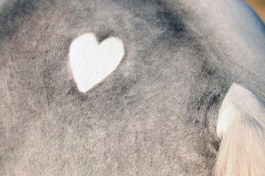 tofino heart clipping blog